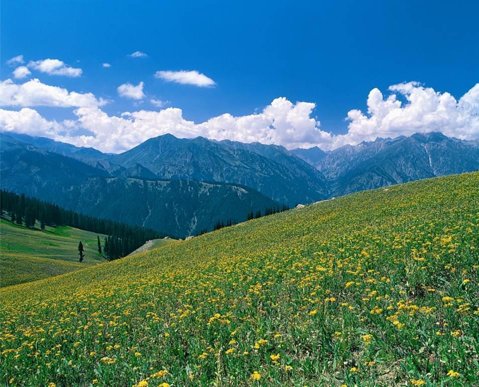 Dessan Meadows in Upper Swat Valley, Pakistan