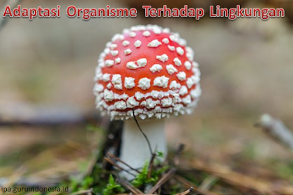 Materi Adaptasi Organisme Terhadap Lingkungan