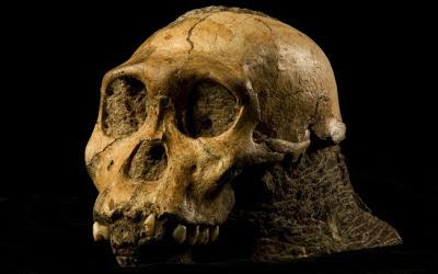 Australopithecus são os antepassados de onde surgiu os seres humanos