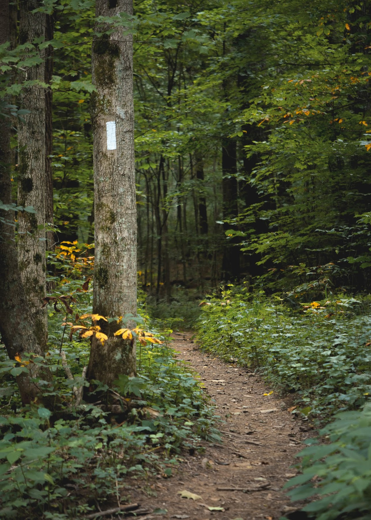 Wildcat Hollow Backpacking Trail Wayne National Forest