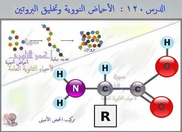 الثالث الثانوى  -    الأحماض النووية وتخليق البروتين