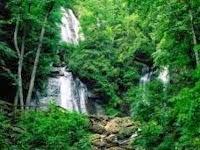 Penggolongan dan Jenis Hutan Indonesia