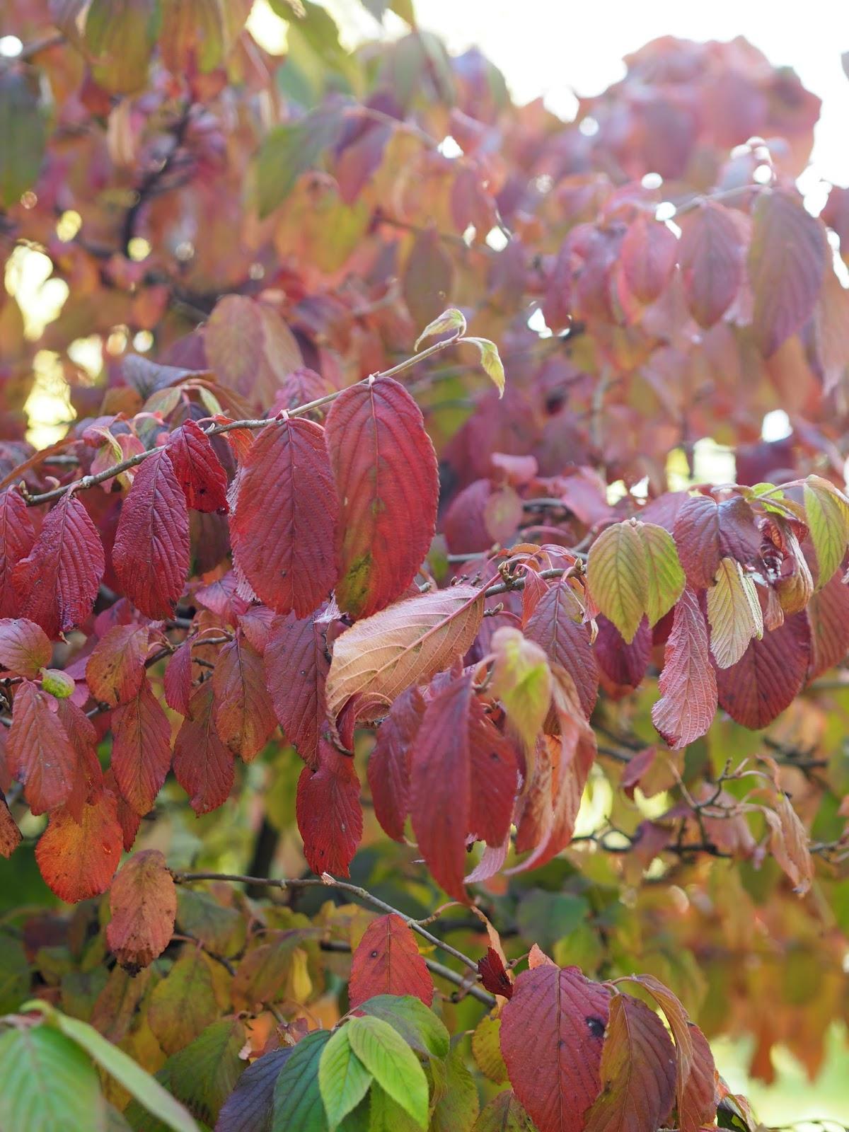 Bright Red/Orange Leaves
