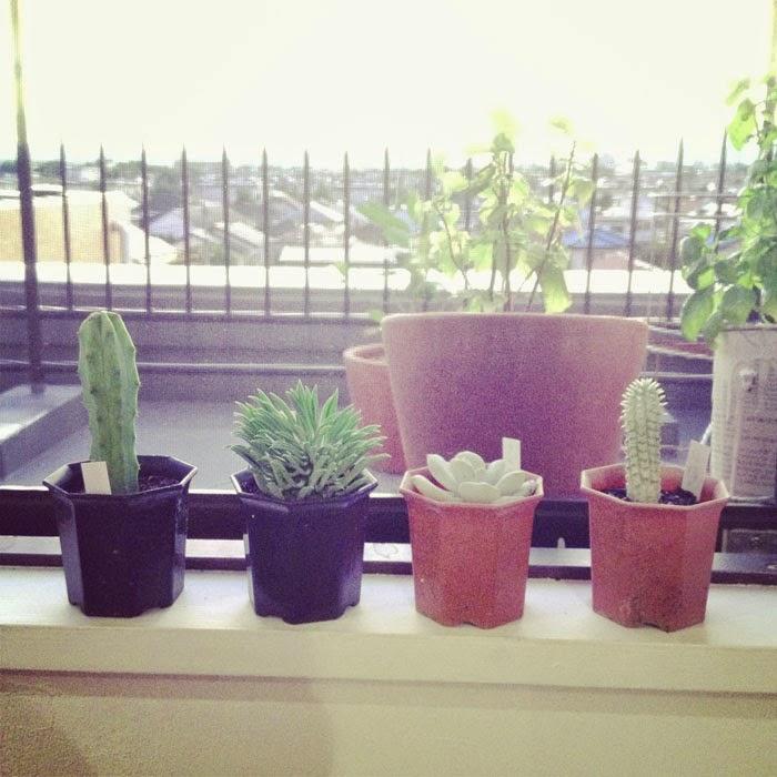 リノベーション住宅の窓辺の多肉植物