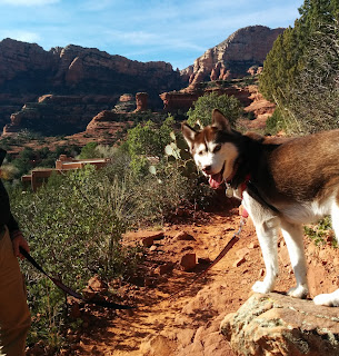 Dog Friendly travel destinations.  Pet friendly, Pet travel, National parks that allow dogs, State parks that allow dogs.  Travel with dogs, pets