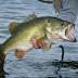 تفسير رؤية السمك في المنام صيده وأكله