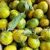 Ya a la venta las primeras mandarinas nacionales, y os hablamos de una imitación de la salsa Lizano