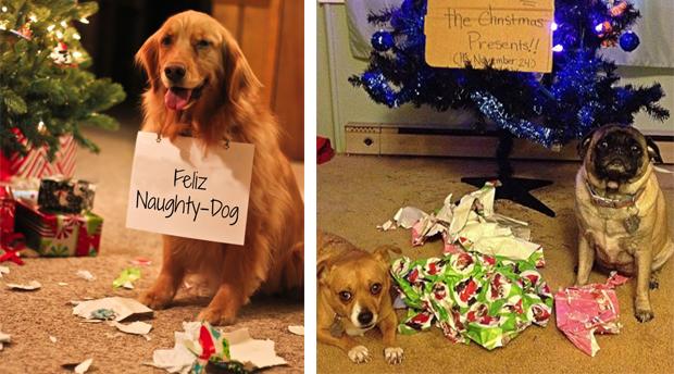 perros arruinando la navidad