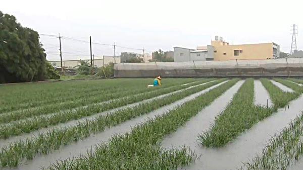 農民靠天吃飯 溪湖鎮長黃瑞珠勘災不捨陷於兩難