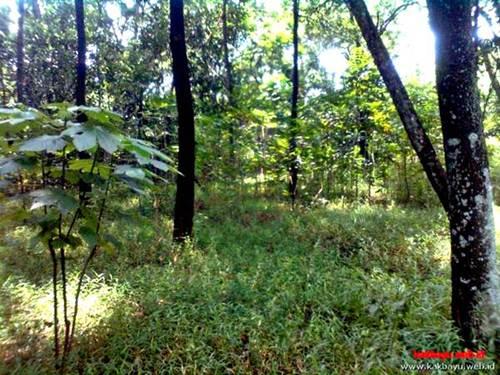 Hutan Kota Universitas Indonesia
