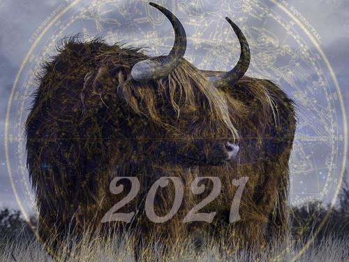 Каким будет 2021 год по восточному календарю
