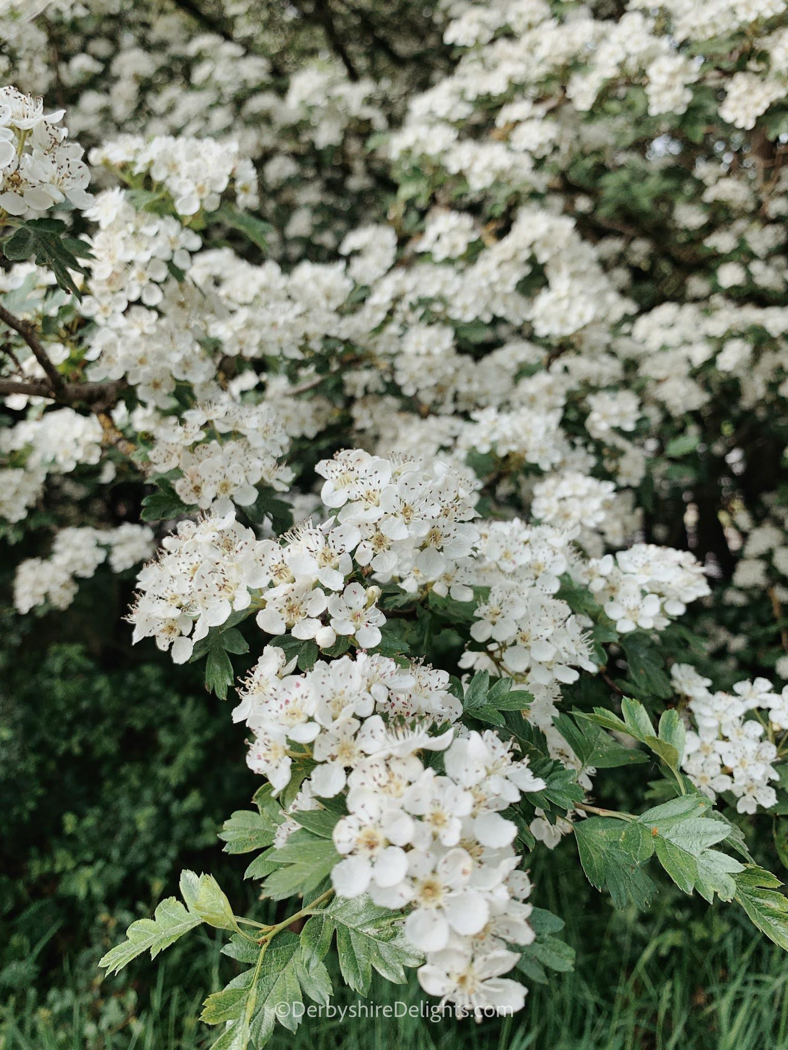 ©DerbyshireDelights.com, Chatsworth, Park, Derbyshire