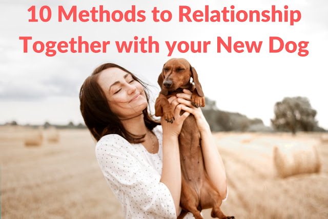 10 Methods to Relationship Together with your New Dog