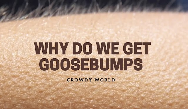 Top 5 Reasons Why Do We Get Goosebumps