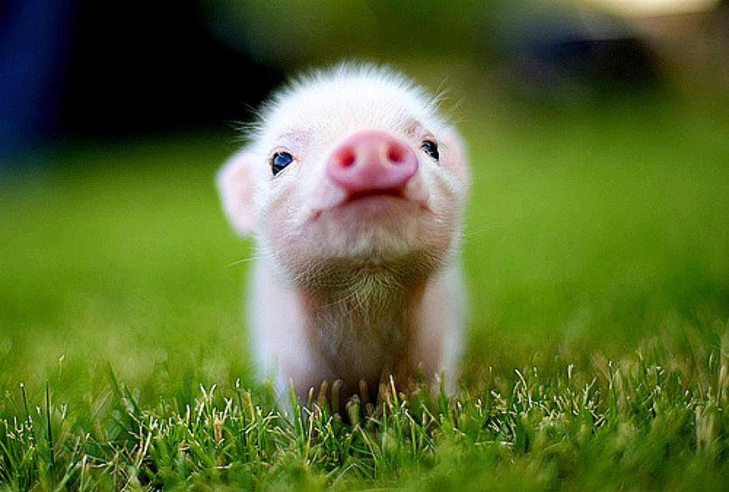 Cute Baby Animal Wallpapers: Top 5 Cute Animal Photos Part 1