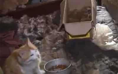Woman Who Was Locked By Her Mother & Fed With Only Cat Food For 26 Years Rescued