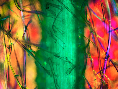 Corn husk with corn silk under polarizing microscope, Infinity X-32 camera. PHOTO: Dr. Robert Rock Belliveau