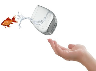 Ciri-Ciri Ikan Kekurangan Oksigen