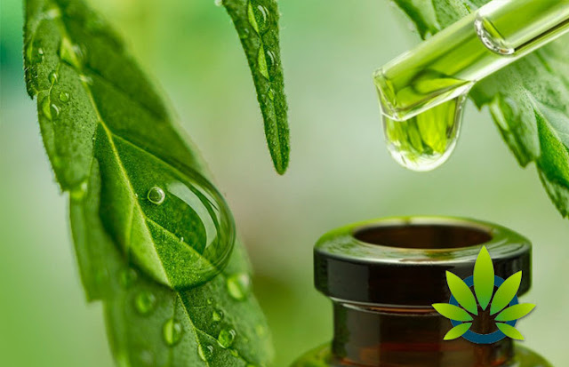 A beginner's guide to CBD oil.