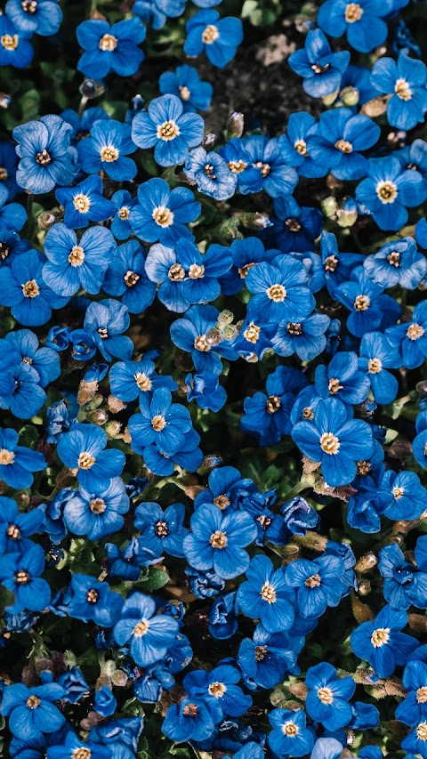 Nụ hoa màu xanh