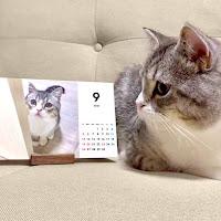 【事例アリ】ペットも創作系も「オリジナル」卓上カレンダーの販売・共有方法と注意点