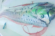 Gegara Fenomena Ikan Oarfish, 11 Turis Australia Tunda Berlibur Ke Selayar
