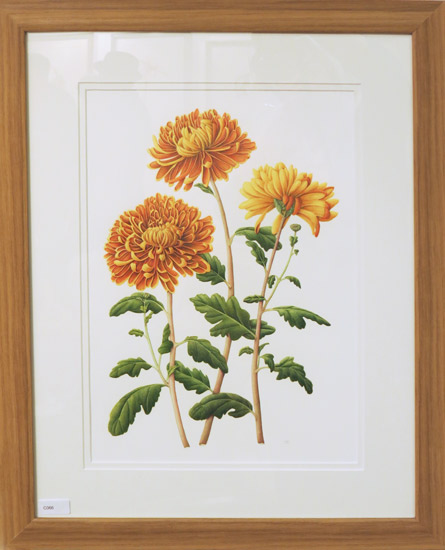 Chrysanthemum 'Tom Pearce' by Julia Blower