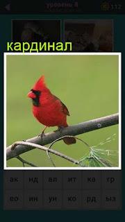 на ветке сидит красного цвета птица кардинал 667 слов 8 уровень