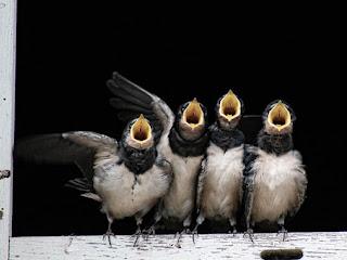 Beragam Manfaat Sarang Burung Walet untuk Kesehatan dan Kecantikan