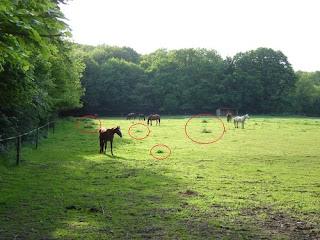 Les refus dans un pré, ces zones que les chevaux ne broutent pas.