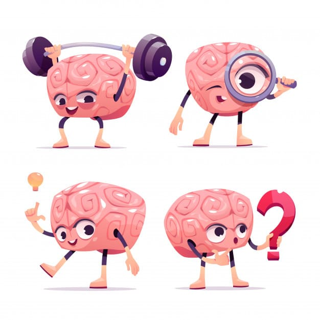 the human brain parts of the human brain facts about the brain parts of the brain and its function fun facts about the brain parts of the brain diagram the human skull interesting facts about the brain how big is the human brain facts about the human brain,the human brain project what is the largest part of the human brain the largest part of human brain is the largest part of the human brain is which is the largest part of human brain facts about the brain for kids diagram of the human brain right part of the brain describe the structure of human brain how the human brain works