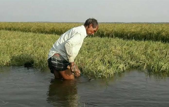ગુજરાત સરકાર ખેડૂતોને પાક નુક્શાનીનું વળતર ચૂકવશે