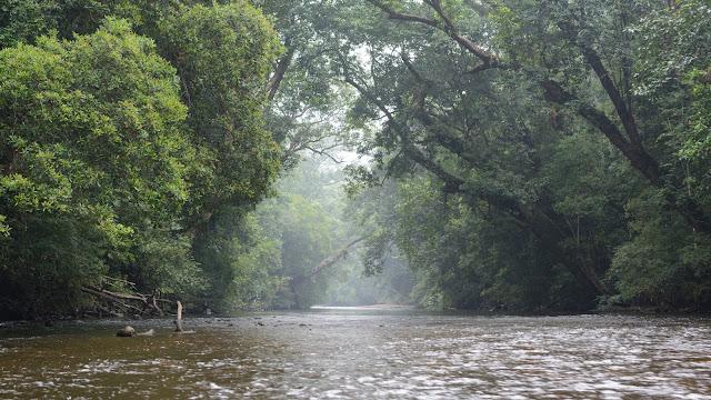 Sungai Tembeling , Pakej 3 Hari 2 Malam Taman Negara , Pakej 2 hari 1 malam taman negara pahang ,
