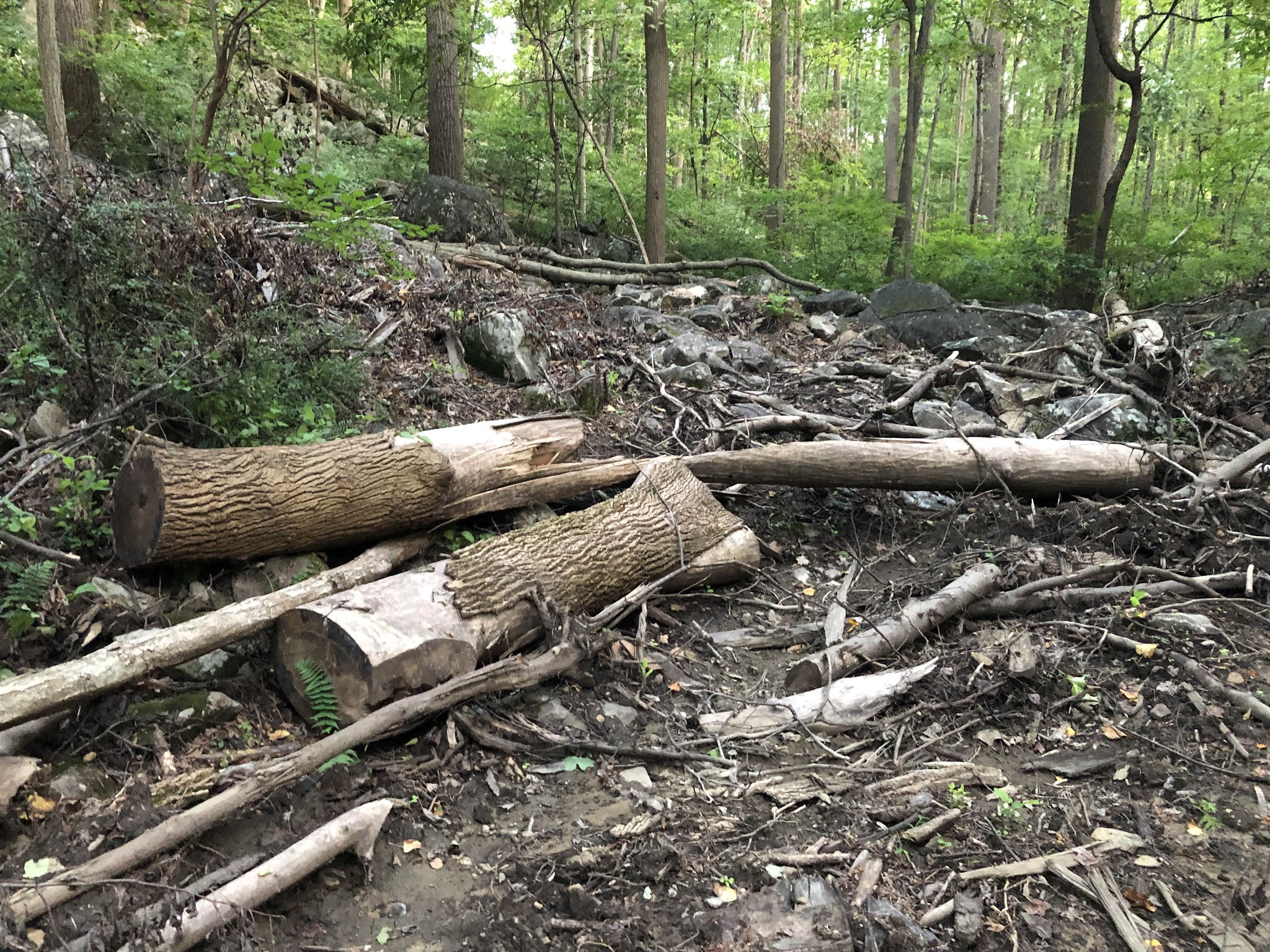 Hurricane Ida's impact on Roaring Rock Park's June 2021 logging sites