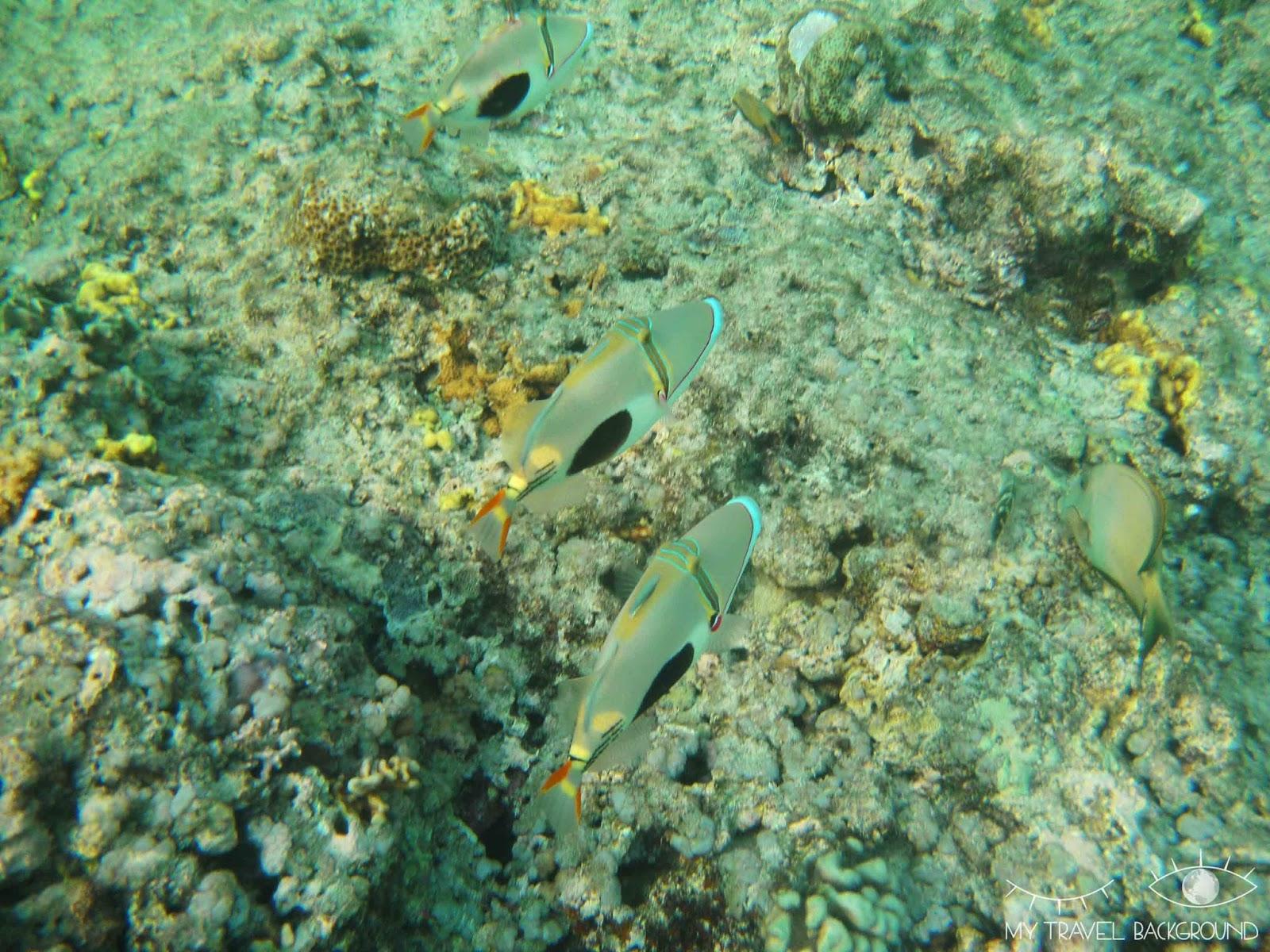 My Travel Background : 8 lieux où plonger dans le monde, Indonésie