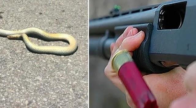 Yılanı öldürmek isterken çocukları yaraladı