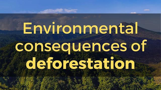 deforestation project