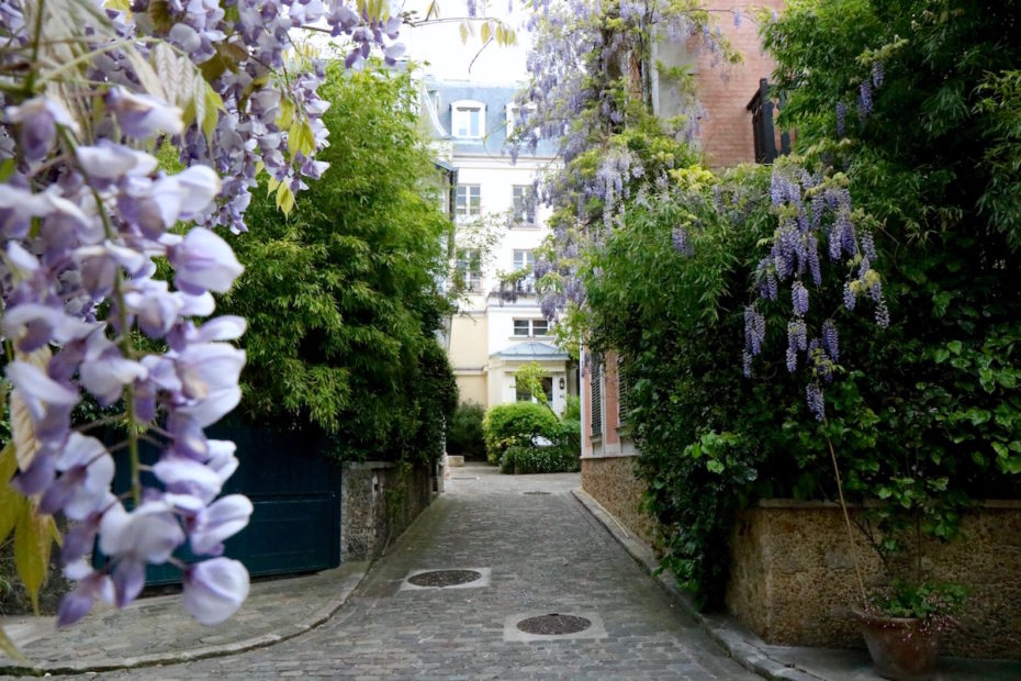Magnificent blooming wisteria on Avenue Frochot