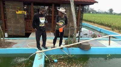 FOTO : Budidaya ikan O&i Farm Subang