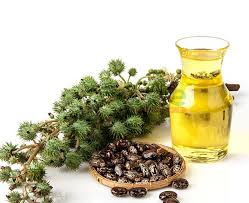 How to Use Castor Oil to Help Relieve Arthritis, Sciatica and Back Pain