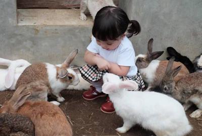 Sempatkan Waktu Luang Dan Berolahrga Bersama Kelinci