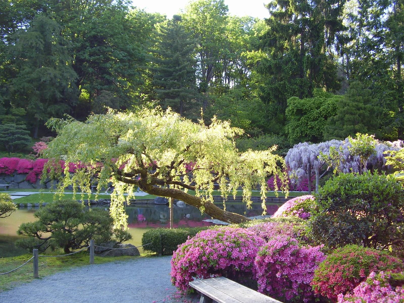 Japan Garden Flowers: Beautiful Japanese Garden Wallpapers