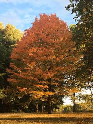 Bushy Run Tree Fall 2016