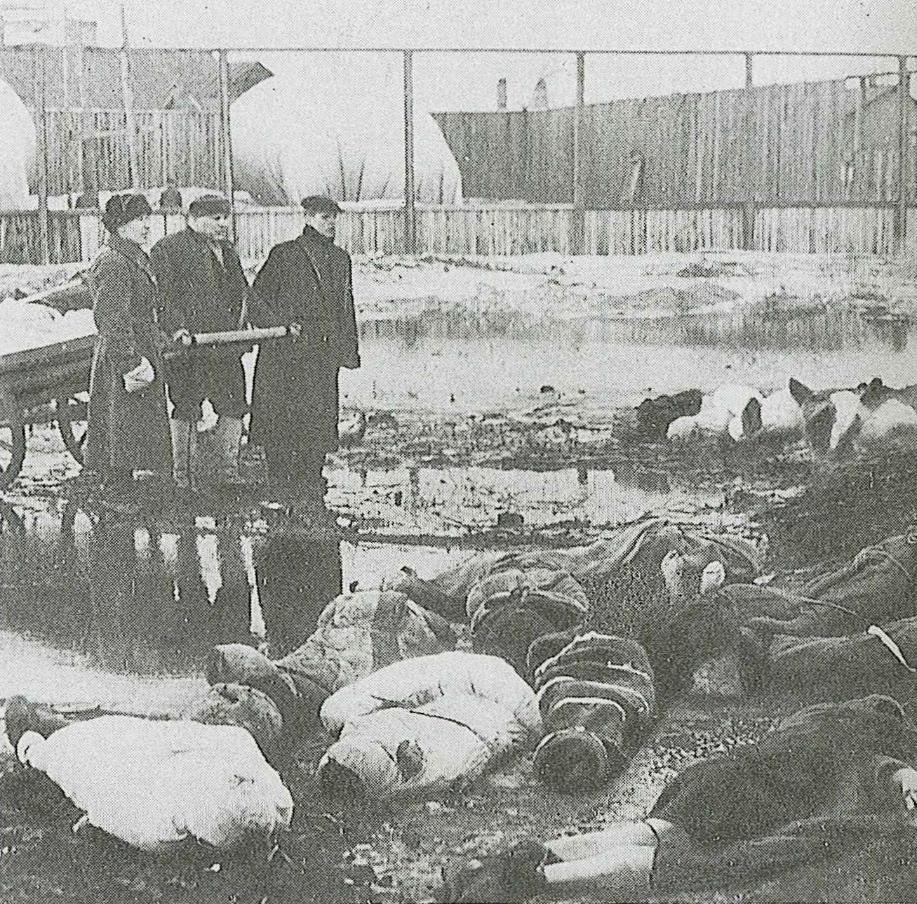 Japan No War (JNW) 日本平和の市民連盟 : ドイツ軍の包囲でレニングラード市民等の死者は約120萬人にも達し約67 ...