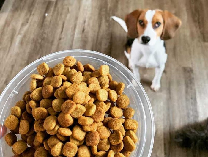 Dog Kibble: What is The Influence Of its Size, Shape and Other Characteristics?