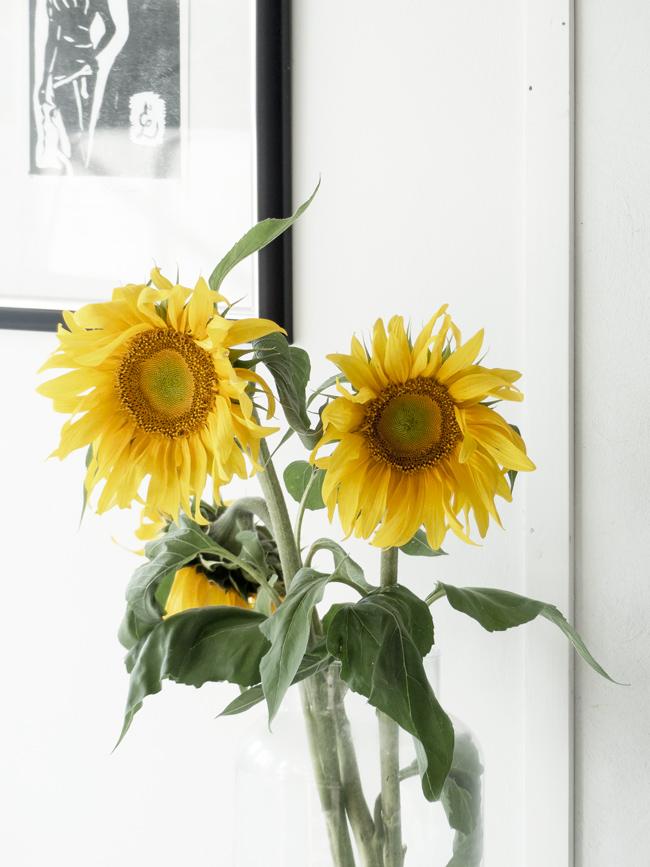 auringonkukka, kukkia, keltainen kukka,