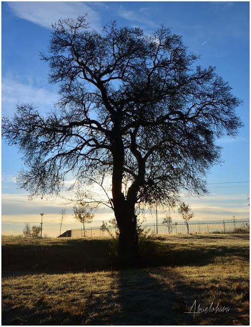 El Árbol. Abuelohara