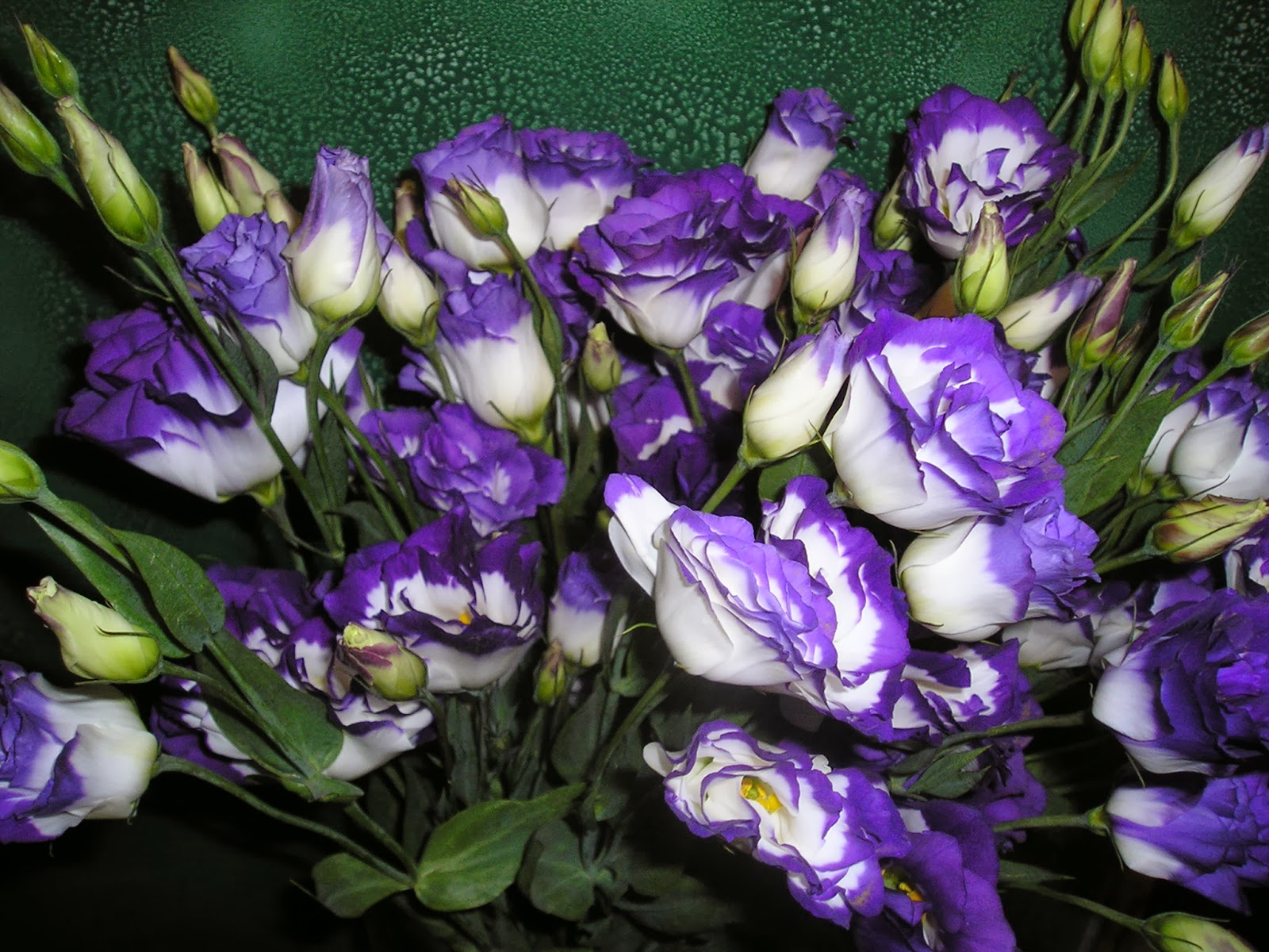 Romantic Flowers: Lisianthus Flower