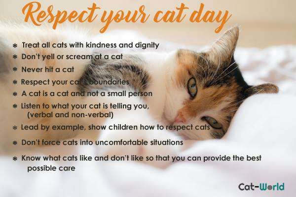 Respect Your Cat Day Wishes pics free download