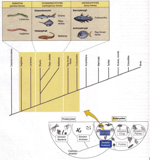 Klasifikasi ikan